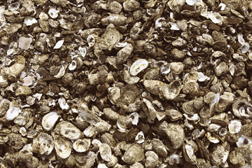 Pile of oyster shells in Wellfleet, MA on Cape Cod.