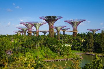 Daytime view of the Supertree grove at Gardens By The Bay, Singa