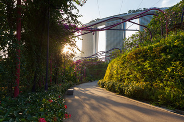 Sunset view of the park alley at Gardens By The Bay, Singapore