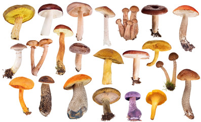 Fototapeta set of twenty two edible mushrooms isolated on white obraz