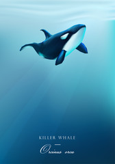 Orca, Killer whale swimming under the ocean surface vector illustration