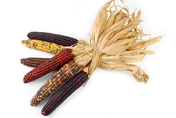 Cob corn Indian isolated on white