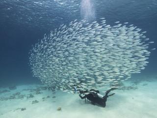Unterwasser - Riff - Fisch - Fischschwarm - Taucher - Fotograf - Tauchen - Curacao - Karibik