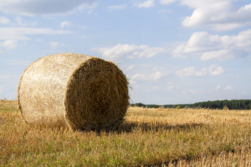 Straw bales in fields farmland with blue cloudy sky at harvesting time