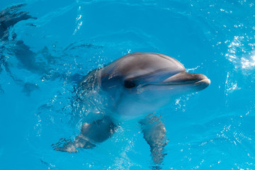 dolphin  portrait while looking at you while smiling