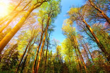 Wall Mural - Farbenfrohe Szene im Wald, die Baumwipfel werden von der Sonne beleuchtet