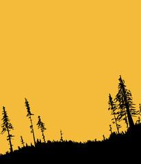 Swedish Forest Background at Sunset