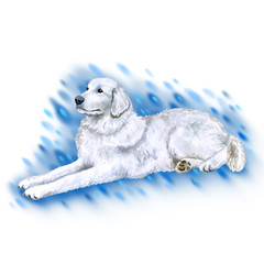Watercolor closeup portrait of Maremma Sheepdog breed dog isolated on white background. Longhair large guardian Italian dog lying. Hand drawn sweet home pet. Greeting card design clip art illustration