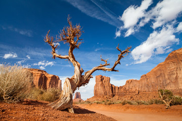 tree monument valley - usa