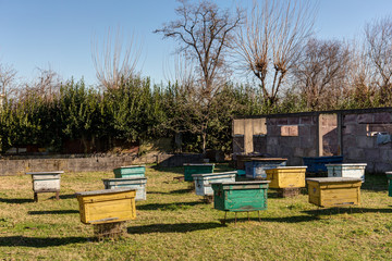 rural apiary with colorful beehives