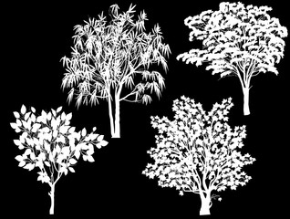 four white foliage trees collection