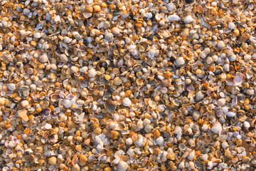 Background from small multi-colored sea shells