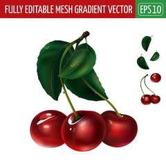 Cherry on white background. Vector illustration