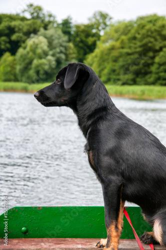 Beautiful Black Dog On Fishing Boat Stock Photo And
