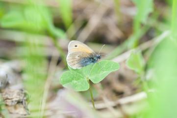 Бабочка на листке