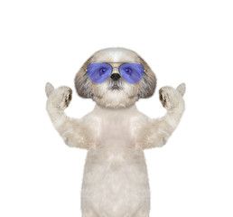 dog in glasses showing thumb up and welcomes