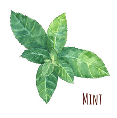 mint leaves on white background, watercolor painting, realistic illustration