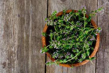 Flowers and Stems of Thyme