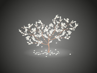 Shining a flowering cherry tree with falling flowers on a dark grey background