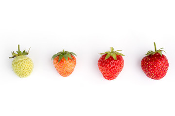 Stages of growing strawberry berries