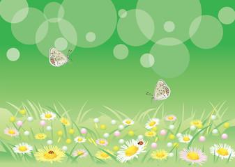 花畑を飛び交う蝶