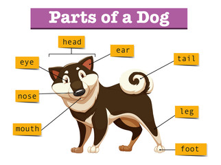 Diagram showing different part of dog