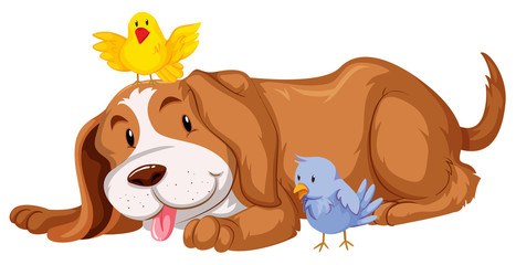 Pet dog with two birds