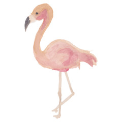 Beautiful, Flamingo, vector, watercolor, eps, isolated, beautiful art.