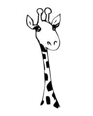 Cute giraffe with long eyelashes