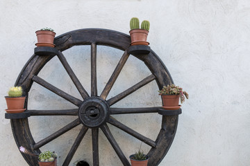 Wheel. Plants arranged on the circumference of an old wooden wheel. A shot that well describes the culture of the humble things of the southern Italy.