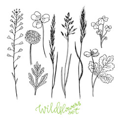Wild flowers hand drawn set. Ink herbs. Herbal medicine vector illustration.