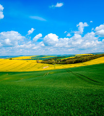 Garden Poster Green Wavy meadows spring landscape in South Moravia, Czech Republic