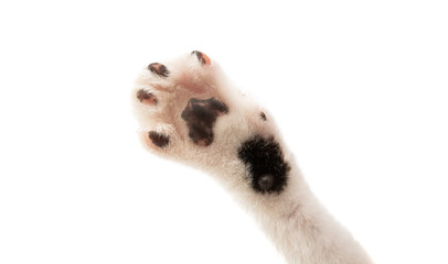 cat's paw isolated