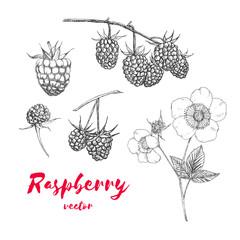 Hand drawn raspberries set