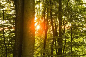 Sonne strahlt durch Laubwald