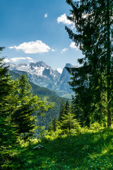 View through dark green fir trees to Dachstein glacier