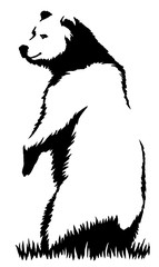 black and white ink draw bear illustration