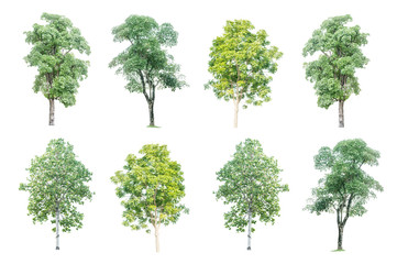 set of eight big green trees isolated on white background