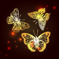 sketching of butterflies