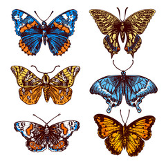 sketch of butterfly