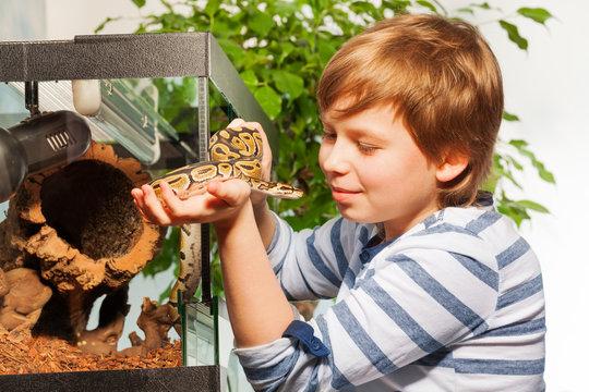 Young boy admiring beautiful Royal python