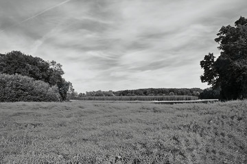 black and white photo with field, hop-garden and trees in Ceske stredohori region near the Village Brozany nad Ohri in summer