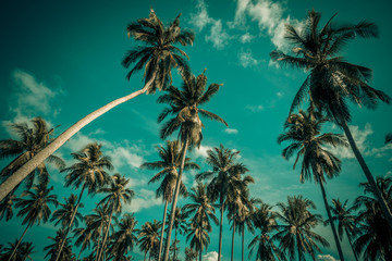 Silhouette coconut palm trees on beach. Vintage tone.