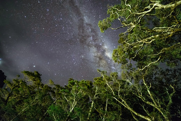 Milky Way Above Tree Branches. Milford Sound, New Zealand
