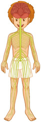 Little boy and nervous system