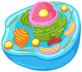 Close up diagram of animal cell
