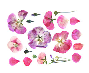 Pressed multicolour geranium set perspective. Dry delicate  isol