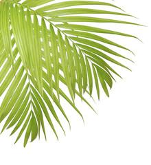Palm leaf isolated on white background