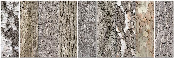 Baumrinde, Baumstämme, Collage