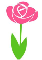 Blume Tulpe Lila